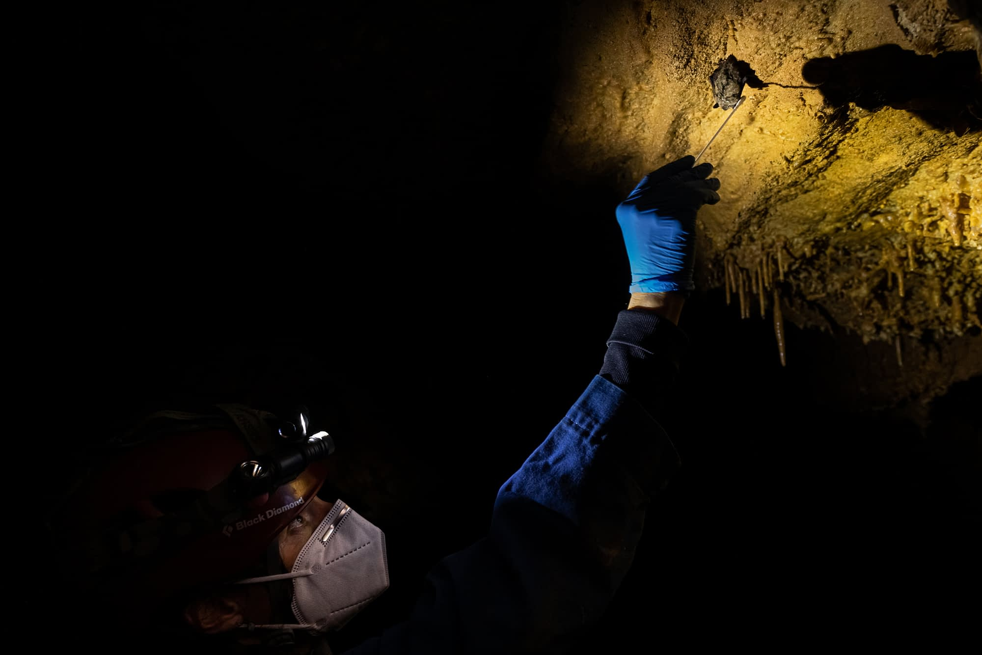 White-Nose Syndrome with Lauri Hanauska-Brown and Tears of the Turtle with Ian Chechet - 2 New Podcasts!